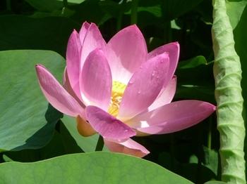 2010-06千葉 S131.jpg